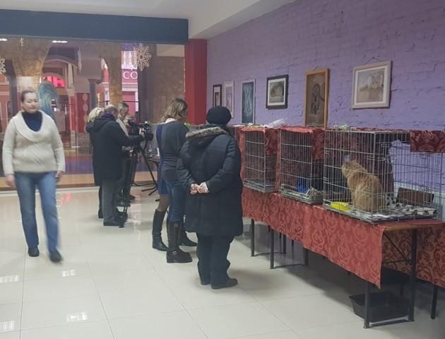 У «AdrenalinCity» проходить виставка котів