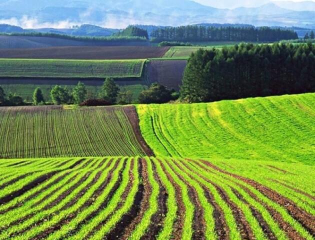 Зеленський хоче через 3 місяці дозволити продаж землі