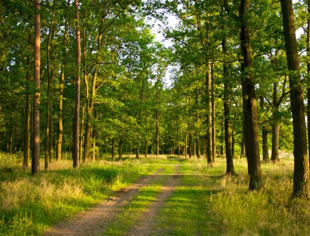 На Волині лісокористувачі сплатили до бюджетів 65 мільйонів  рентної плати