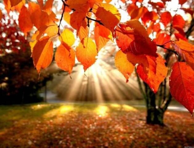 На Волині на вихідних 19-20 жовтня затримається тепла погода
