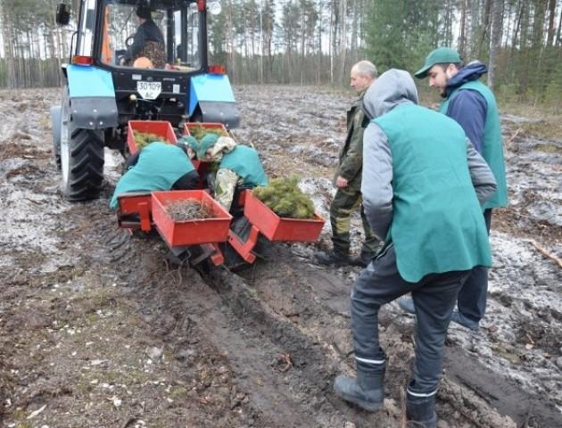 Волинським лісникам садити ліс допомагає диво-машина. ФОТО