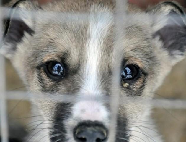 Вигнав на балкон, бив та хотів з'їсти: у Луцьку живодер знущається із пса. ВІДЕО