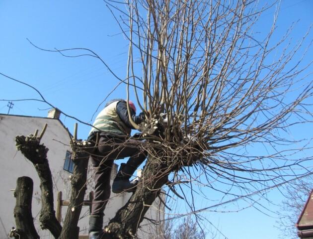 У Луцьку планують виділити понад 1,5 мільйона на кронування дерев