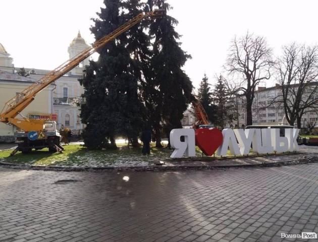 У Луцьку почали прикрашати головну ялинку міста. ФОТО