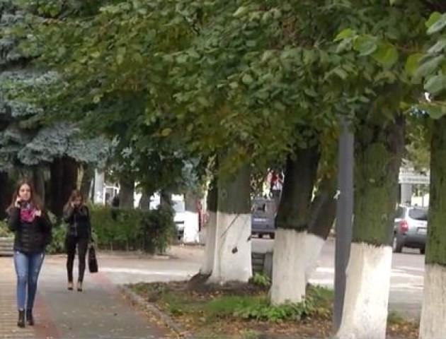 Старі, трухляві, аварійні –у Луцьку зріжуть більше сотні дерев. ВІДЕО