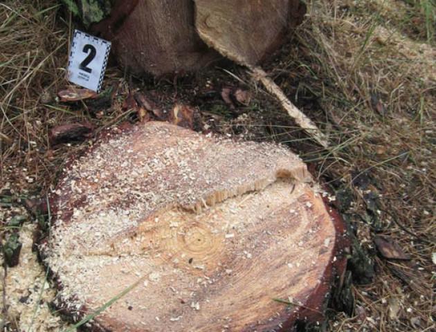 На Волині поліцейські викрили викрадачів лісу