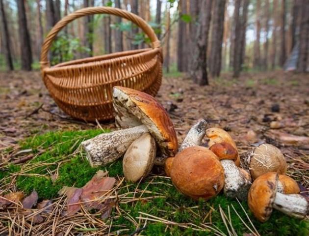 На Волині в лісі заблукали грибники
