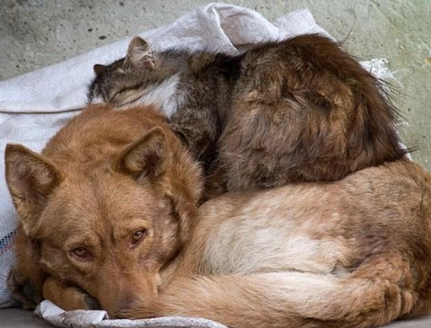 У Луцьку не зменшується кількість безпритульних тварин
