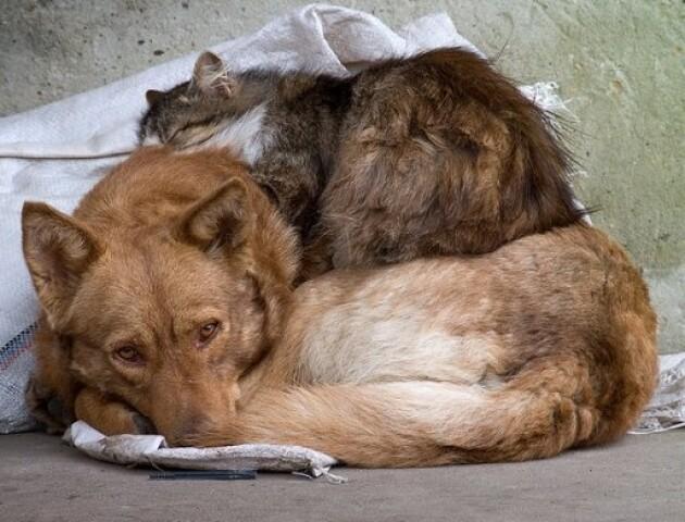 Для «полювання» на безпритульних тварин у Луцьку виділять більше 6 мільйонів