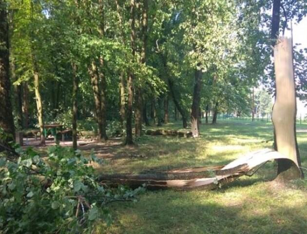 На Волині буревій за 15 хвилин позривав дахи і повалив дерева