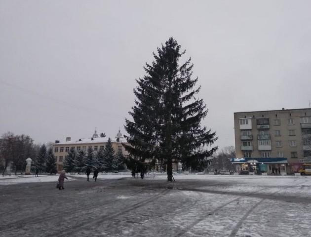 У Володимирі встановили новорічну ялинку