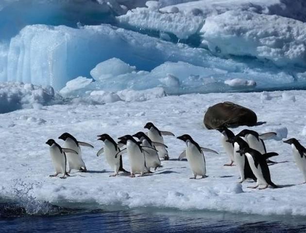 Стали відомі правила подорожей до Антарктики