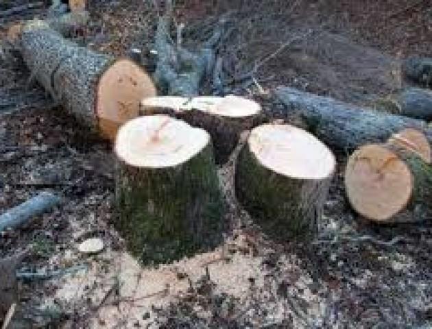 Рубкою дерев біля Луцька займеться поліція. ВІДЕО