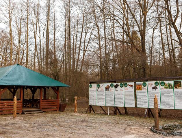 Як і чим живе взимку «Цуманська пуща»: про зубрів, благородних оленів і трішки історії. ФОТО
