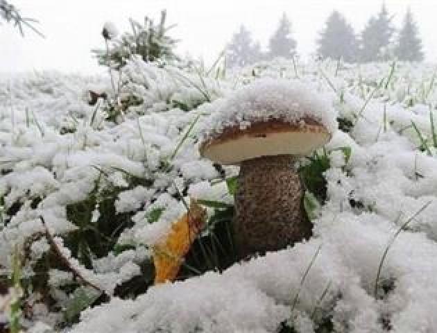 У Карпатах знову випав сніг. ВІДЕО