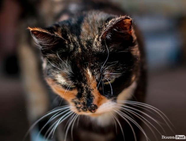 Луцькі коти у своє свято. ФОТО