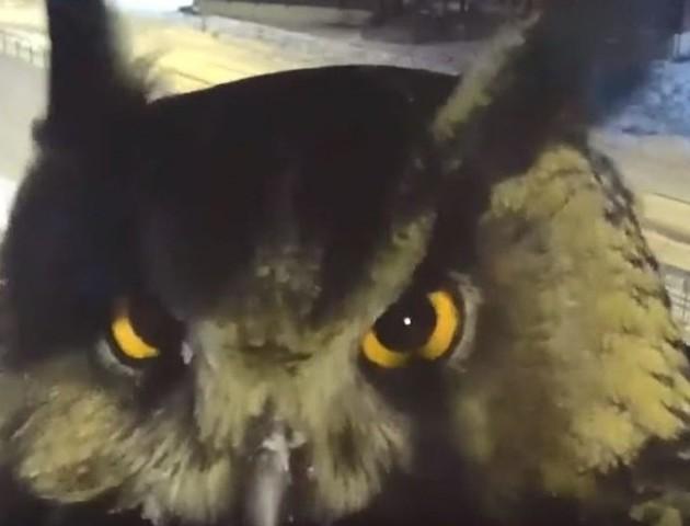 Сова стала зіркою після появи в камері відеоспостереження. ВІДЕО