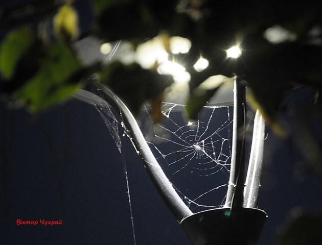 Романтичні вечірні фото вулиці Лесі Українки