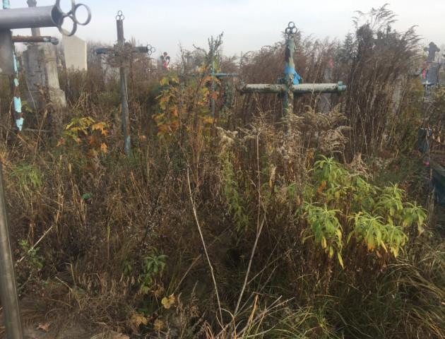 Кладовище у Рожищі заросло чагарниками. ФОТО