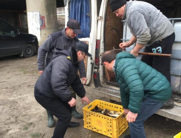 У Луцьку за гроші небайдужих рибалок в Стир запустили майже 1,5 тонни риби