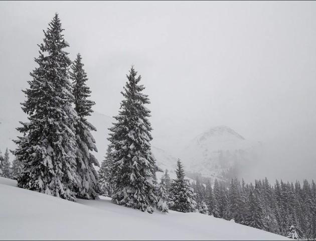Неймовірна краса зимових Карпат. ФОТО