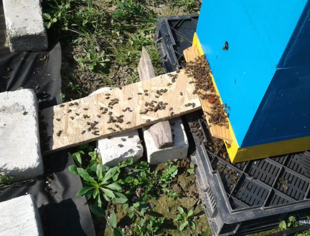 Загибеллю бджіл на Волині зайнялася поліція. ФОТО