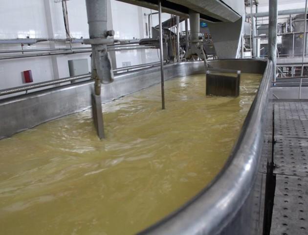 Як молоко перетворюється на сир: екскурсія на Рожищенський сирзавод. ФОТО