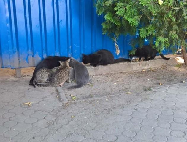 Зупинку біля автостанції у Луцьку «заполонили» безпритульні коти. ФОТО