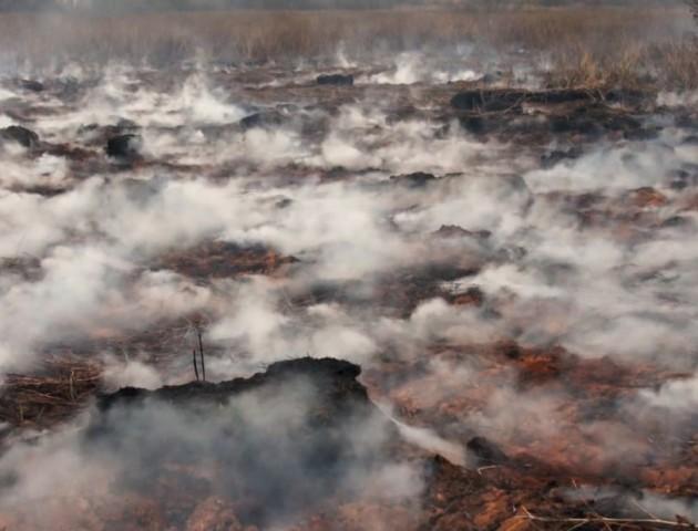 Масштабна пожежа торфовища на Волині: працює понад 40 рятувальників. ВІДЕО