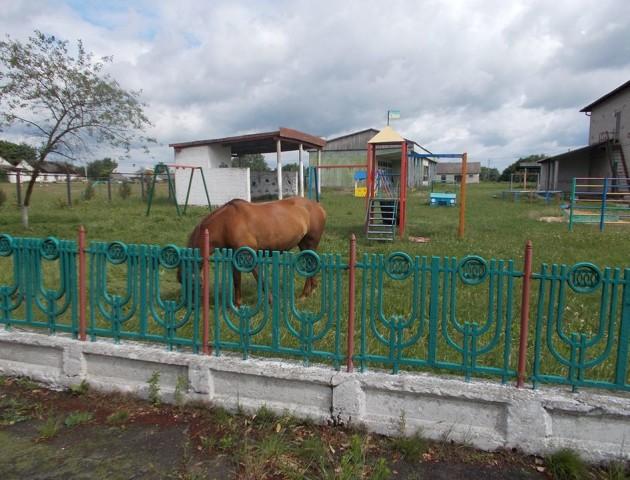 У селі на Волині на території дитсадку влаштували випас коней і розпиття алкоголю