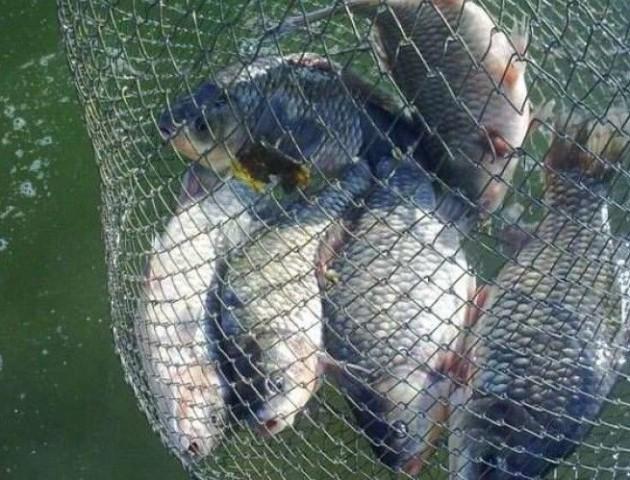 15 сіток і штрафи: на Волині «полювали» на рибалок-порушників