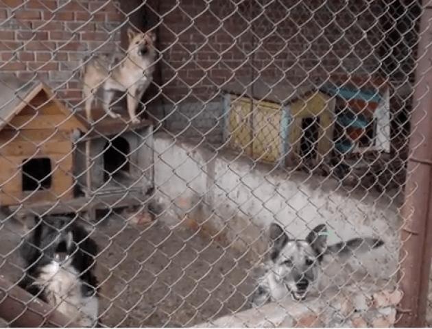 Напередодні зими у Луцьку може побільшати безпритульних собак. ВІДЕО