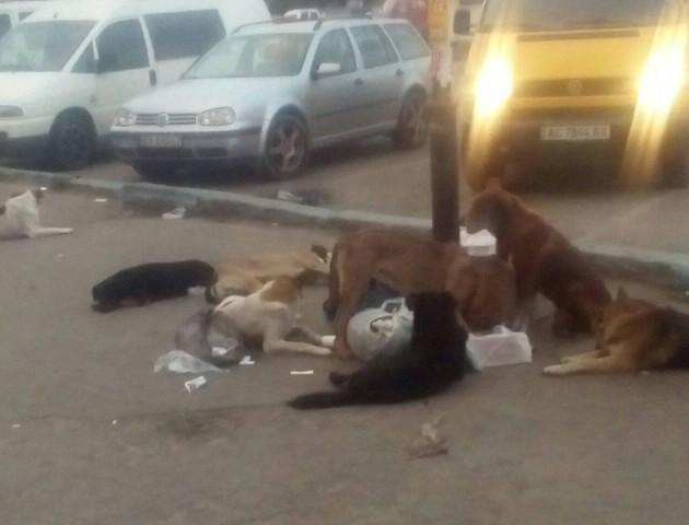 У Ковелі біля супермаркету безпритульний пес напав на дівчинку