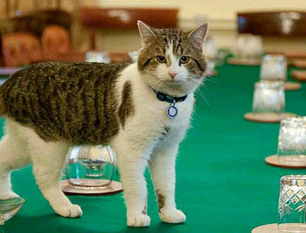 У Великій Британії котів беруть на високі і важливі посади
