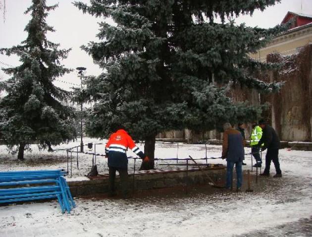 У Ковелі почали прикрашати новорічну ялинку. ФОТО