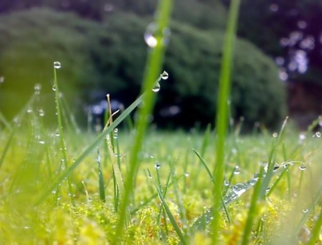 Якою буде погода у Луцьку та області 16 липня