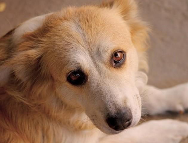 «Моя собака, що захочу, то з нею зроблю»: у Луцьку живодер продовжує знущатися із пса