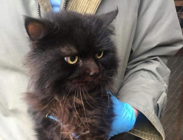Лучанка знайшла кота, якого 5 років тому викинув вітчим. ФОТО