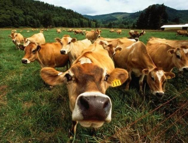 Волинян просять ознайомитися з новими правилами сплати ЄСВ членами фермерського господарства