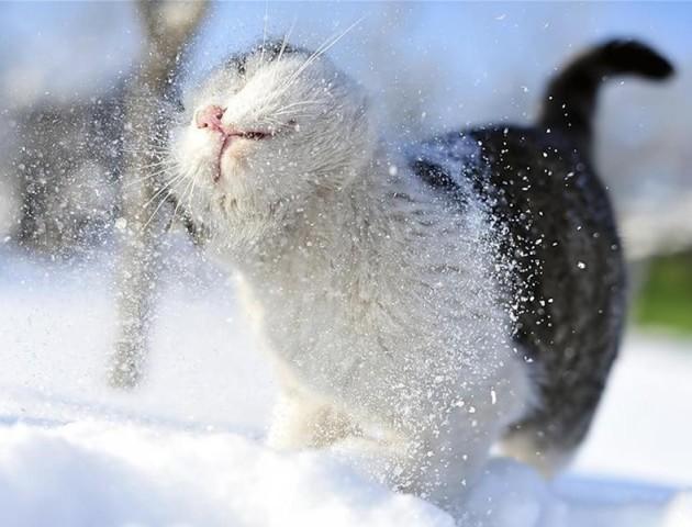 Емоції і радість: як домашні улюбленці зустрічають сніг