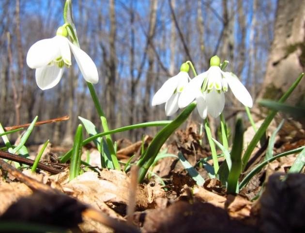 Справжня весна: якою буде погода у Луцьку 5 квітня