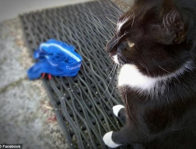Пара закоханих посварилася через кота-крадія. ФОТО