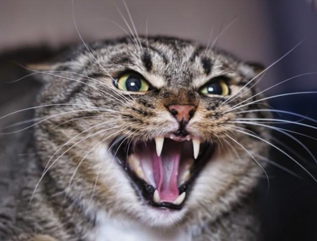 У Луцьку зловили кішку з підозрою на сказ. ФОТО