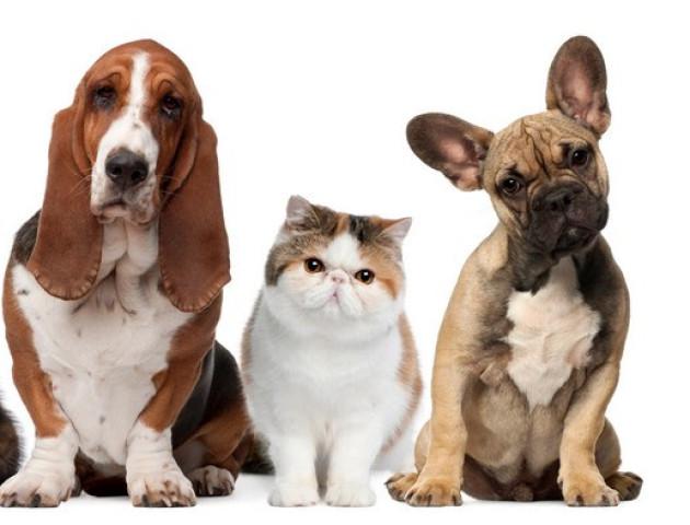 Крок до гуманності: у Луцьку відбудеться марш за права тварин