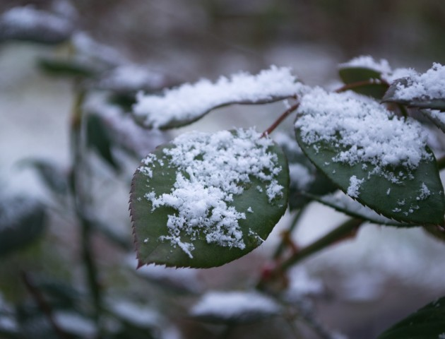 Сніг з морозом: прогноз погоди у Луцьку на 12 березня