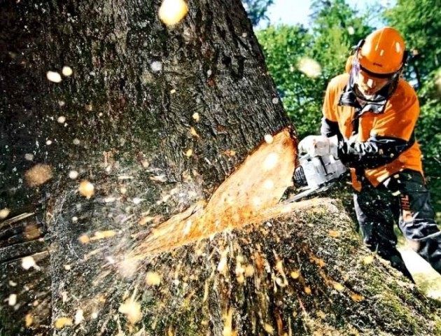 В Україні планують перейти від суцільних до вибіркових та поступових систем рубок лісу