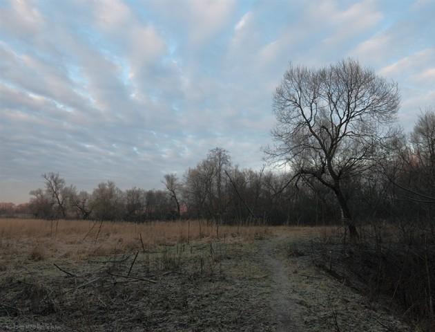 Якою буде погода в Луцька та в області 7 грудня