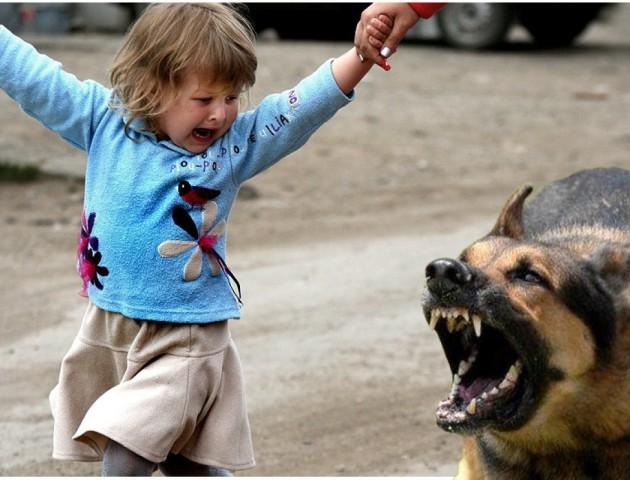 У Луцьку на 3-річну дитину напали собаки. ФОТО