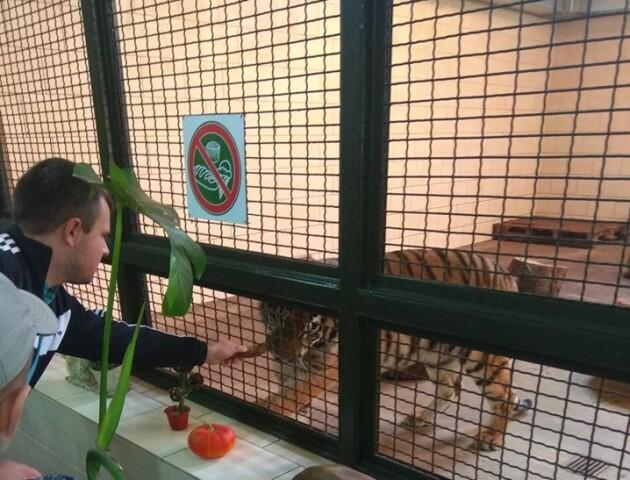 Кинули кошеня до левів і годували тигра хлібом. У Луцькому зоопарку скаржаться на гостей
