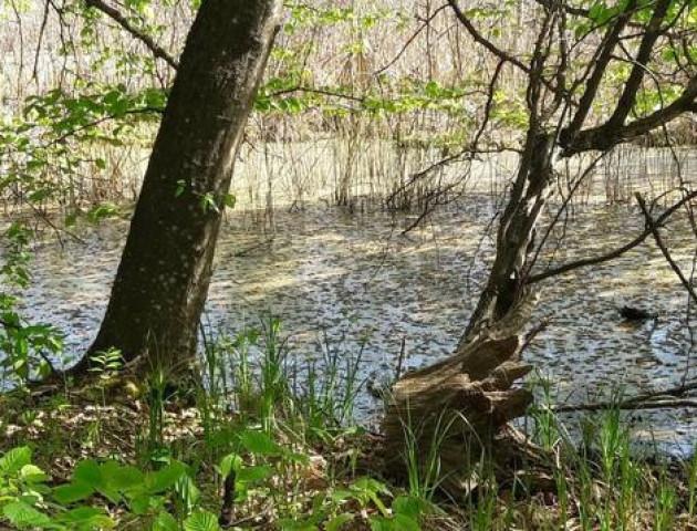 В Україні є озеро, яке не має дна і ніколи не замерзає